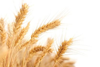 Вековую статистику сбора зерновых хвастовством Ткачева и Медведева не изменить