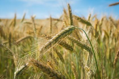 Всемирный банк оценил эффективность аграрного сектора России