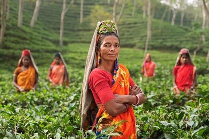 Импорт чая из Шри-ланки приостанавливается в понедельник