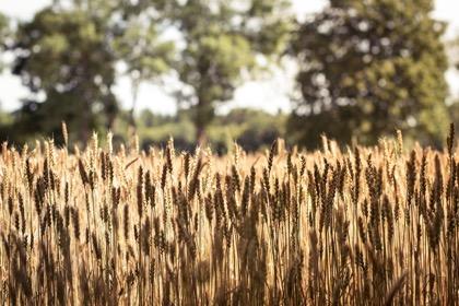 Прибалтика взбунтовалась против аграрных привилегий «старых европейцев»