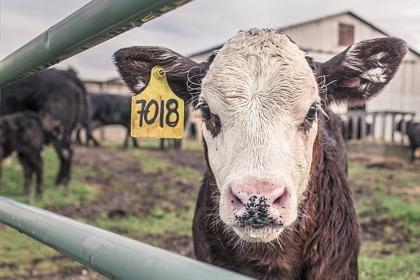 Немецкие фермеры призвали к отмене взаимных санкций с Россией