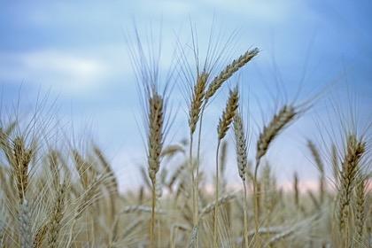 Россия продолжит политику протекционизма в аграрном секторе