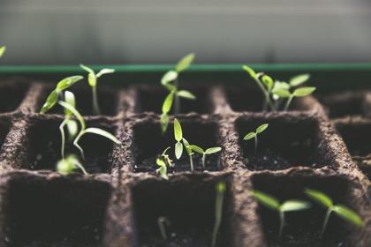 ФАС одобрила сделку Bayer-Monsanto вРФ
