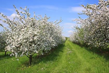 Минсельхоз спрогнозировал рост урожая плодов и ягод на четверть
