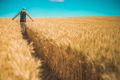 Россия в августе повторит рекорд по экспорту зерна