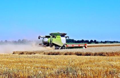 Египет лидирует в закупках российского зерна