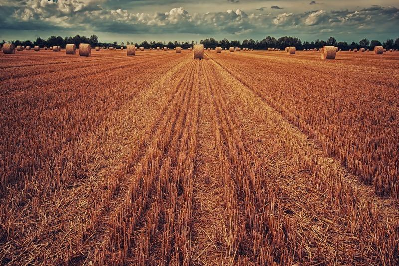 Экспорт российского зерна вырастет на 17%