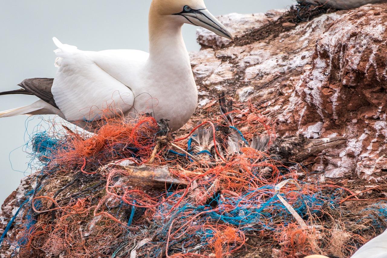 ЕС запретил одноразовую пластиковую посуду и ватные палочки