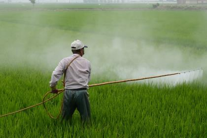 Monsanto выплатит $80 млн заболевшему раком пользователю Roundup