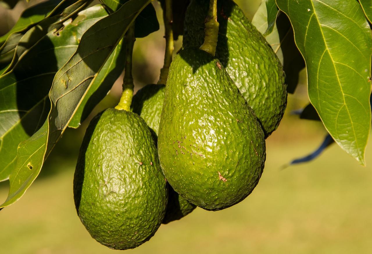 Мексиканские авокадо рекордно подорожали после угрозы Трампа