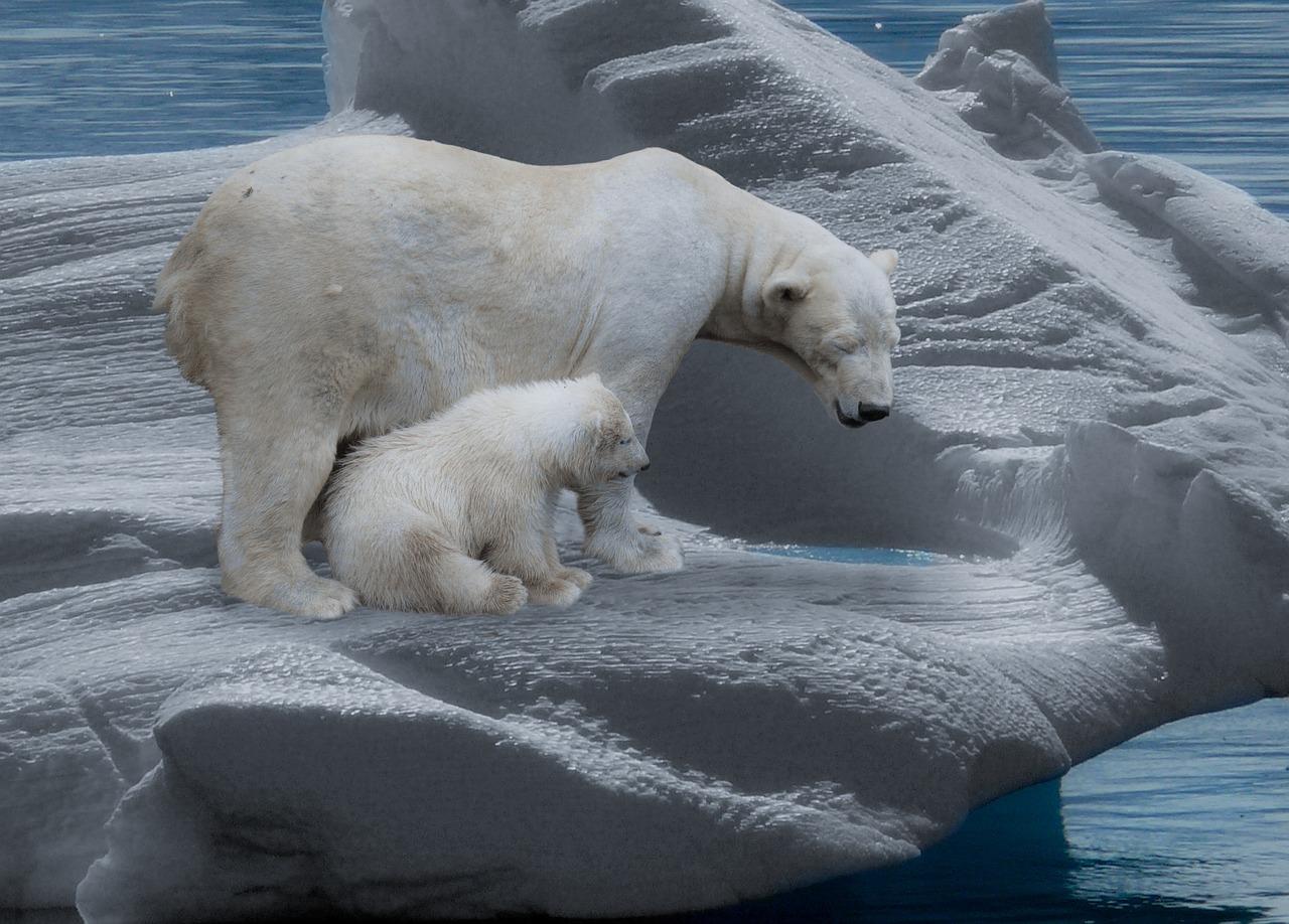 Подкомиссия ООН признала часть Арктики продолжением континентального шельфа России