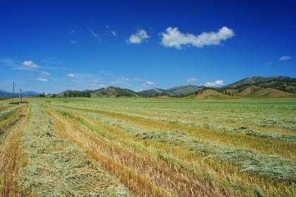 Ростех поможет продать треть зерна Сибири в Китай