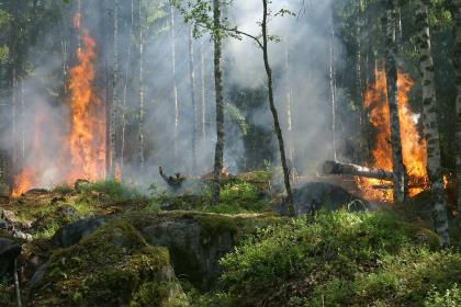 Леса в огне: Медведев вводит личную ответственность губернаторов