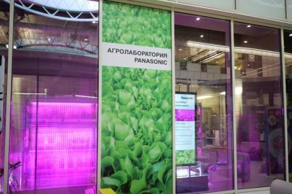 МГУ и Panasonic исследовали «срок жизни» свежесрезанных зеленых салатов