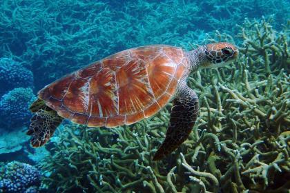 В ООН обсуждают проект новой конвенции по защите богатств океанов