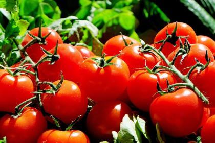Российские производители томатов требуют введения 80%-ых пошлин на импорт